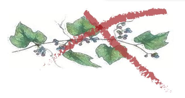 Invasive vines