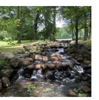 Tibbetts Brook as it runs through the park (photo-Sara Kelsey)